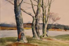 David Reed_Lakeside Study